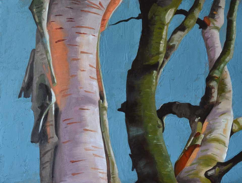Oil painting of birch bark in the sunlight