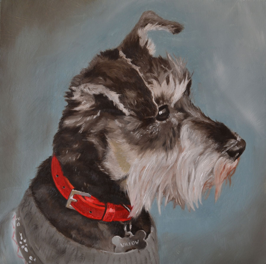 Oil painting of Willow, miniature Schnauzer