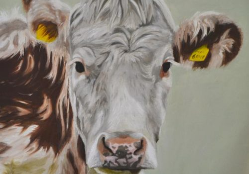 Oil Painting Of Hereford Cow - Life
