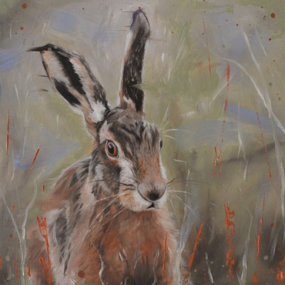 Hare In The Long Grass
