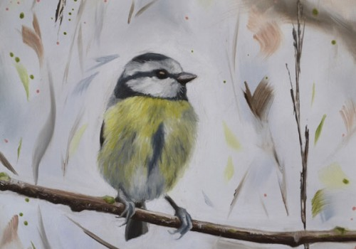 Chipper - Blue Tit
