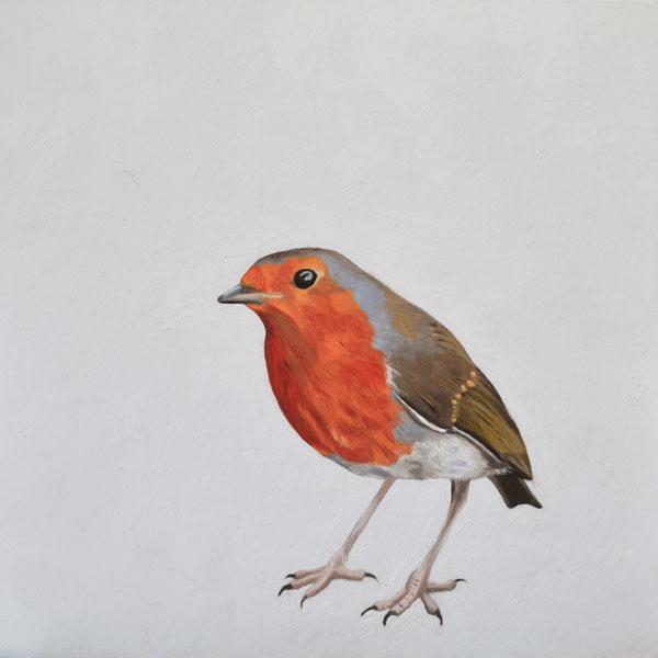 Curious - robin