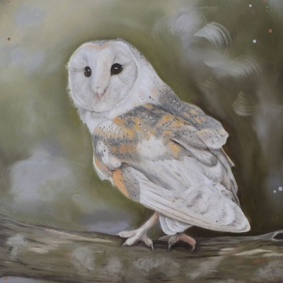 Silent Watcher Barn Owl