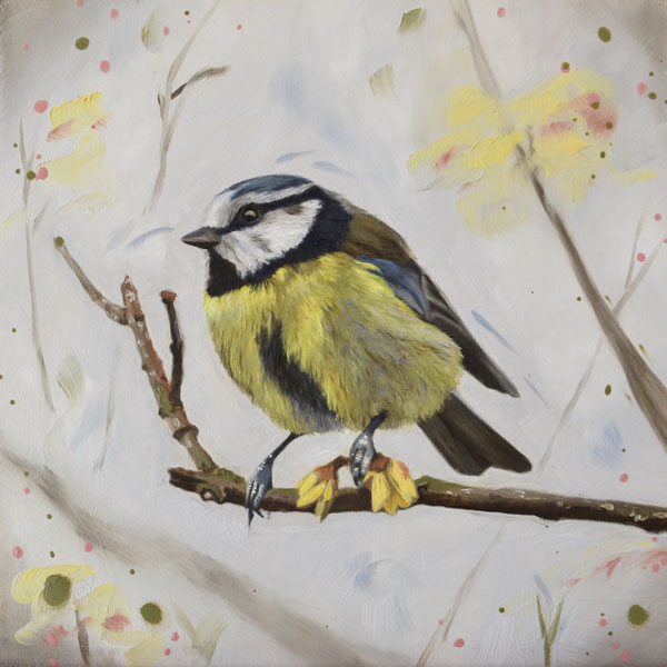 Winter sweet - blue tit