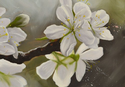 Morello Cherry Blossom Oil Painting By Laura Beardsell-Moore