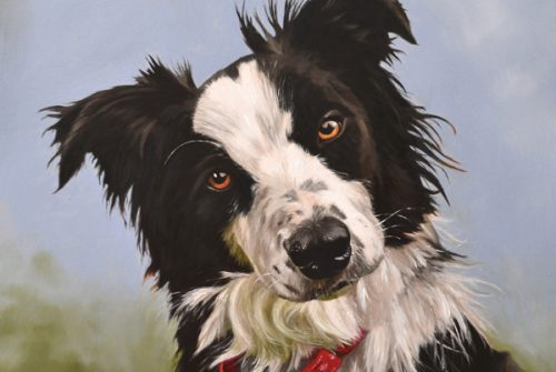 Oil painting of border collie, Megan