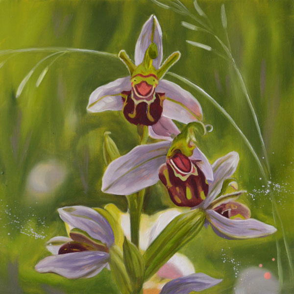 Oil Painting Of Bee Orchids